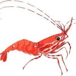 Shrimp Finance