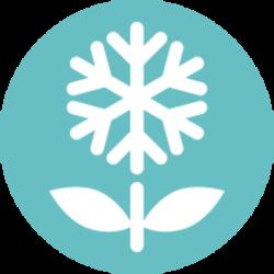 SnowBlossom